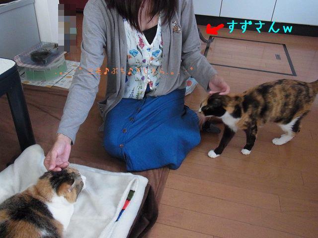 猫使い@YORIKOちゃん♪