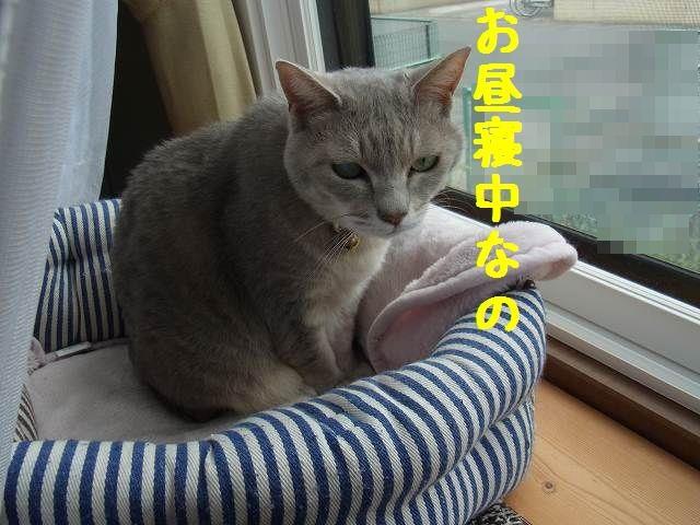 お寝ボケ・瑠璃ちゃん
