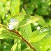 芽吹きの季節、雨もまた嬉しの画像
