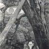 黄門杉の画像