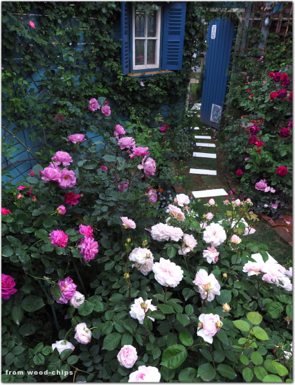 バラの庭 アプローチ