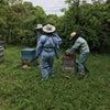 採蜜全盛期のはじまりの画像