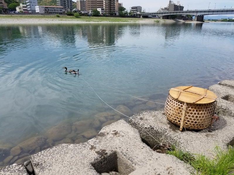 長良川鵜飼 う~ちょんのブログ