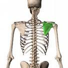 肩甲骨体操のご紹介の記事より