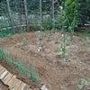 かろうじて大丈夫でした。家庭菜園。の画像
