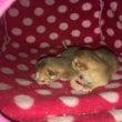 New babies…