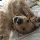 犬の食事:サプリメント②: ココナッツオイルについての記事より