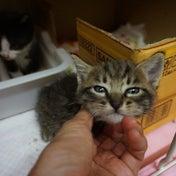 町内会で地域猫活動を行う