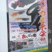 愛媛のメダカ展示会は来週の日曜ですよ!