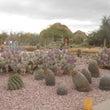 砂漠植物園