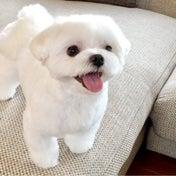 何犬か悩む愛犬
