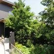 横浜の家~三渓園