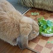 今日は食べるかな?