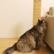 子猫と遊ぼう-妄想-