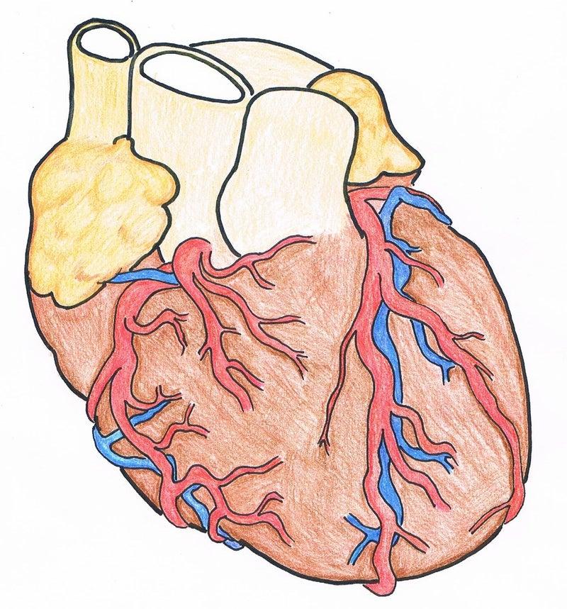 右 冠状 動脈