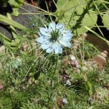 新緑の中の花たち