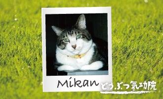 高齢猫 治療 気功 体験談 猫 ねこ ネコ にゃんこ