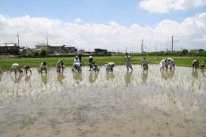 田植え・稲刈りイベント2019