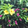 南国の花たち✿の画像