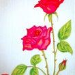美しい赤い薔薇