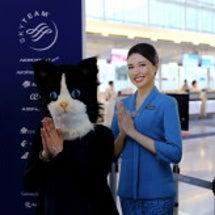 台湾とうた祭とネコ