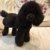 我が家の愛犬(≧∇≦)の画像