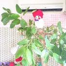 【本日6/1 20時スタート】月イチ開店日☆&関西出店決定のお知らせの記事より