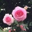 6/1・今夜おとめ座…