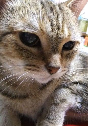 捜査 一 課長 猫