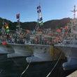 スルメイカ漁2017