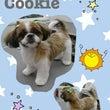 ☆★クッキー★☆