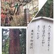 【樹木】世界遺産 日…
