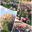 【春の花】山下公園が…