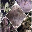 【お花見】見事な藤の…