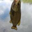6日に釣りに行きまし…
