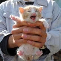 子猫生まれました
