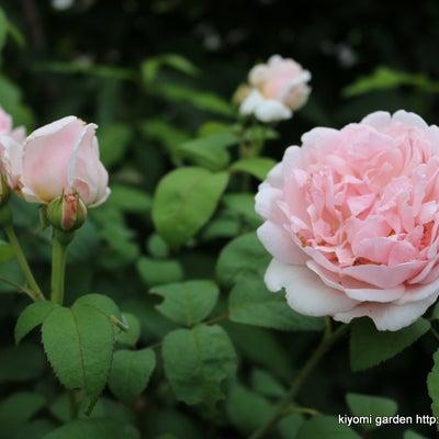 庭で咲く多年草・宿根草 あれ?こんな花もの記事に添付されている画像