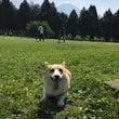 富士山の麓にコギだら…