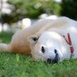 シニア犬のドッグフー…