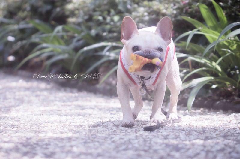 フレブルパン アメブロ犬 アメブロ犬ブログ