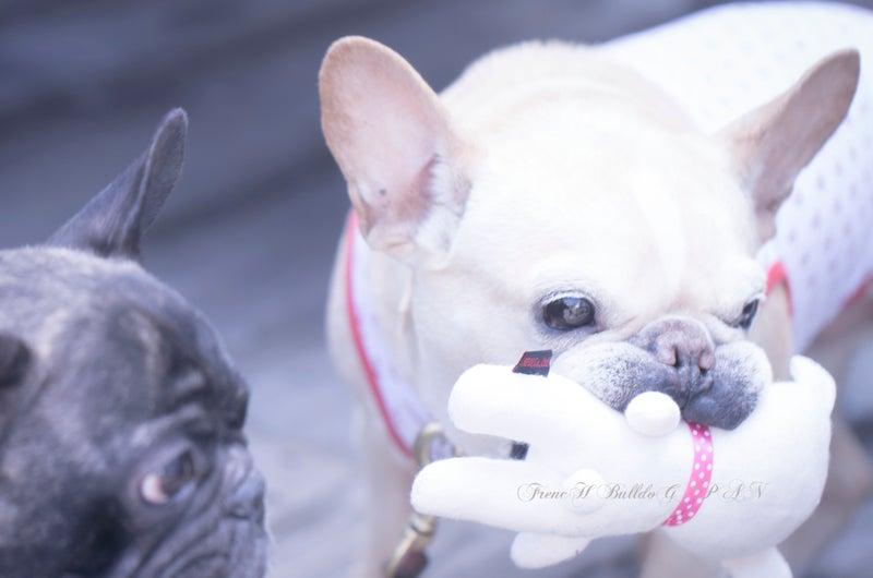 フレンチブルパン アメブロ犬ブログ アメブロ犬