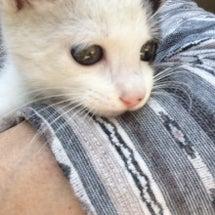 7匹目の保護子猫!!