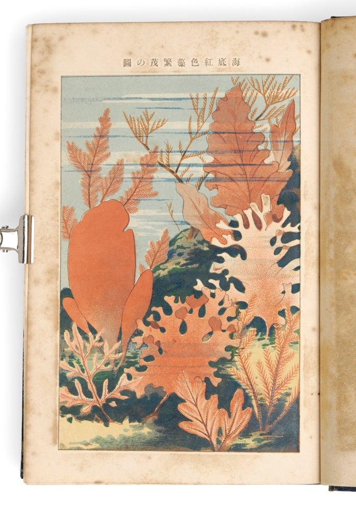 村越三千男の野外植物の研究 | mizusumashi-tei みずすまし亭通信