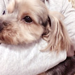 うちの愛犬