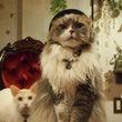 猫音三周年イベントあ…