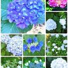 お花と動物にダブルで癒される♡『市川市動植物園』の記事より
