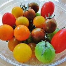 彩とりどり トマト