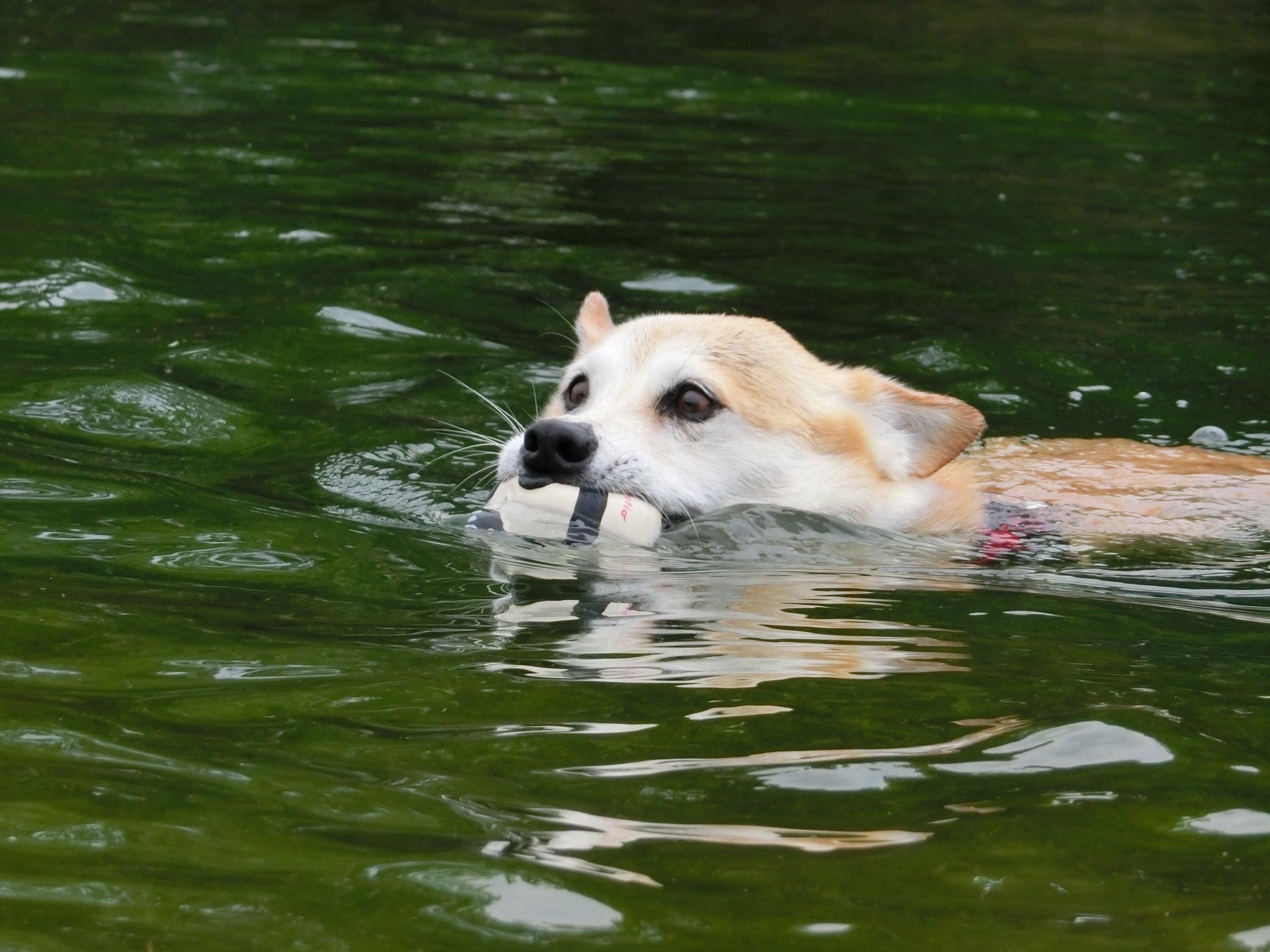 いつもの川で遊びました ♪(≧▽≦) ...
