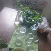 【募集】6/28(水)ドクダミを使った虫除け&チンキ作りの画像