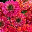 夏の花と最近の出来事…